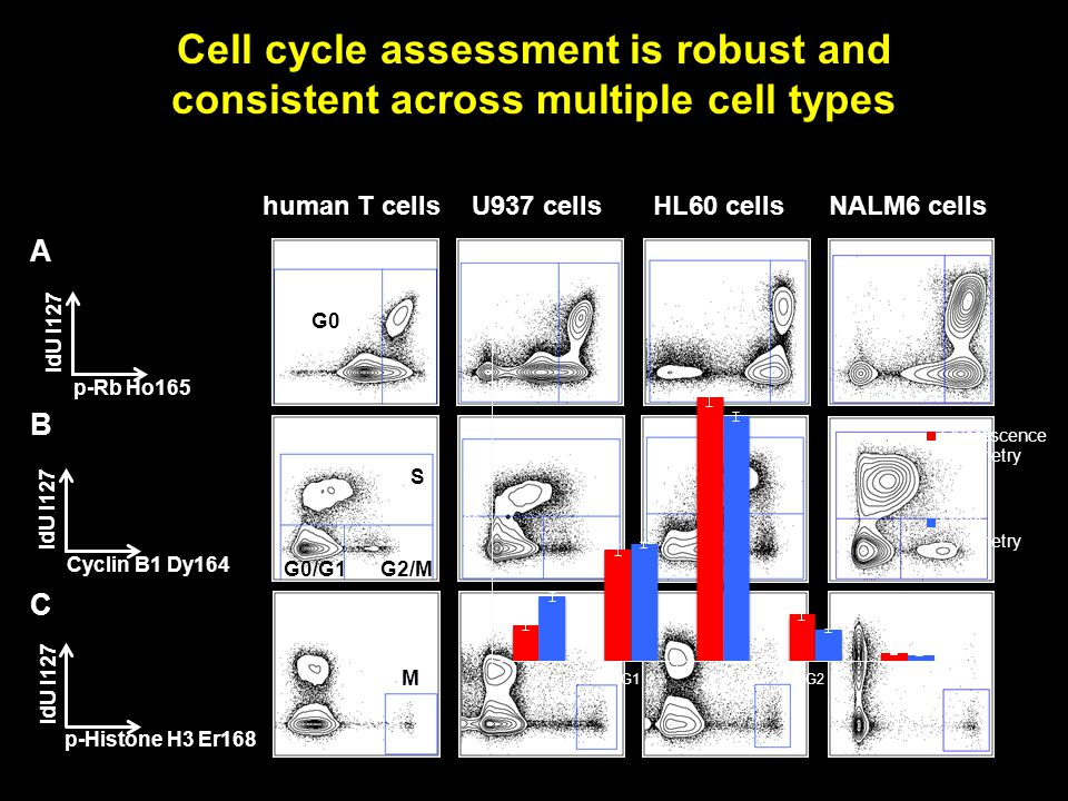 U937 cellsHL60 cellshuman T cells B A C Cyclin B1 Dy164 IdU I127 p-Rb Ho165 IdU I127 p-Histone H3 Er168 IdU I127 G0 M S G2/M G0/G1 NALM6 cells Cell cycle assessment is robust and consistent across multiple cell types