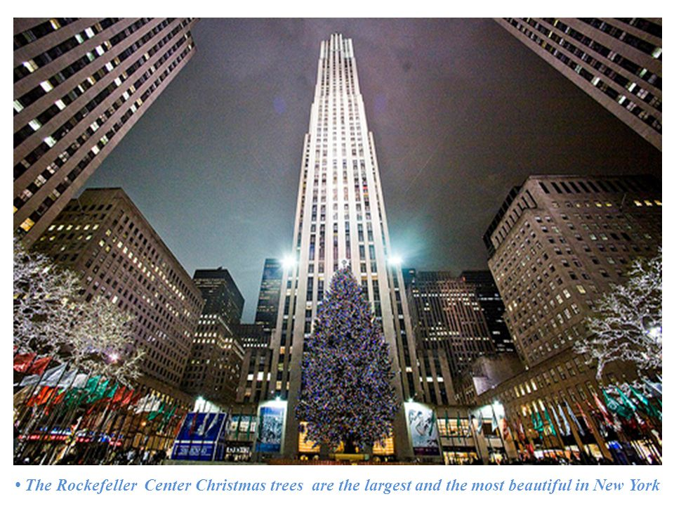 The Rockefeller Center Christmas trees are the largest and the most beautiful in New York