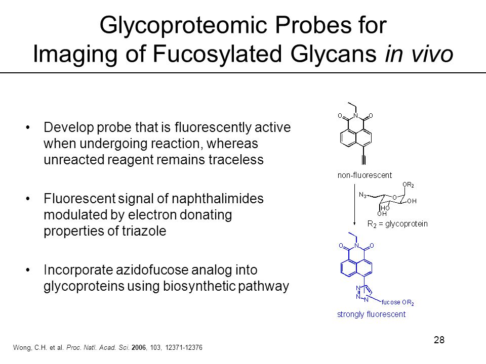 28 Glycoproteomic Probes for Imaging of Fucosylated Glycans in vivo Develop probe that is fluorescently active when undergoing reaction, whereas unrea
