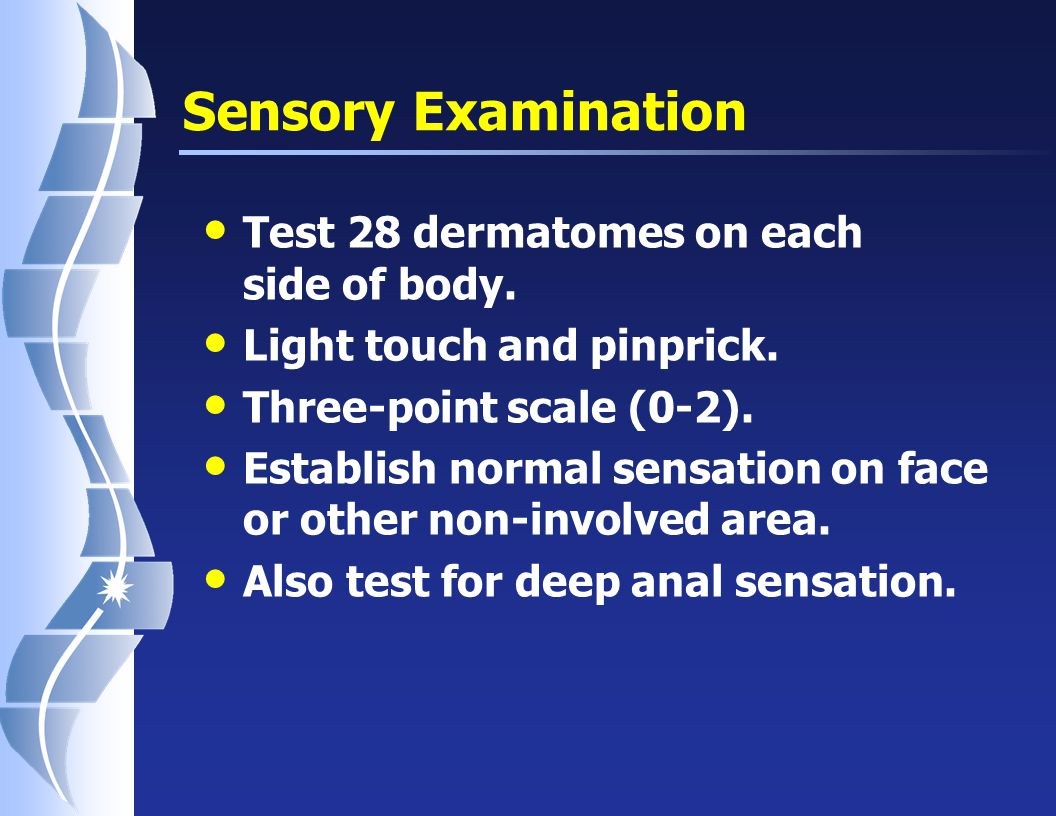 Motor Examination: Key Muscles UPPER EXT C5 = Elbow Flexors C6 = Wrist Extensors C7 = Elbow Extensors C8 = Finger Flexor (FDP-3) T1 = Finger Abductor (ADM) LOWER EXT L2 = Hip Flexors L3 = Knee Extensors L4 = Ankle Dorsiflexors L5 = Extensor Hallucis Longus S1 = Ankle Plantar- flexors