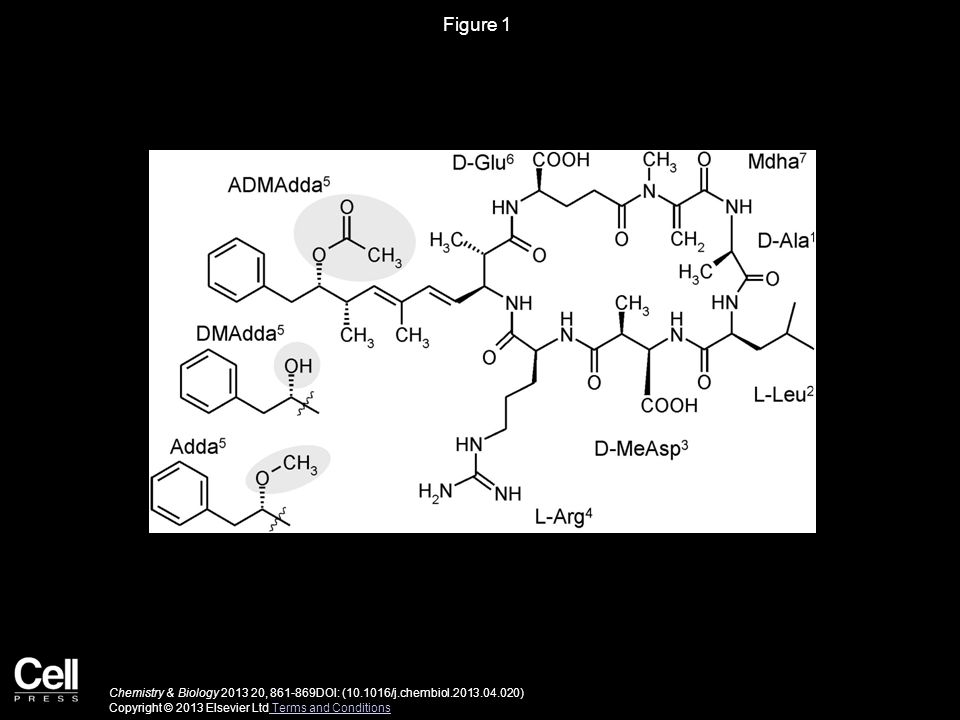 Figure 1 Chemistry & Biology , DOI: ( /j.chembiol ) Copyright © 2013 Elsevier Ltd Terms and Conditions Terms and Conditions