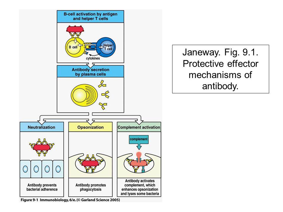 Janeway. Fig. 9.1. Protective effector mechanisms of antibody.