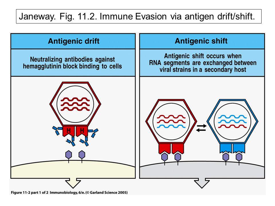 Janeway. Fig. 11.2. Immune Evasion via antigen drift/shift.