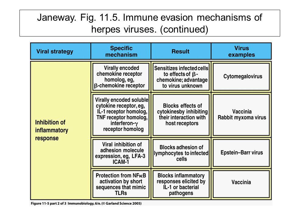 Janeway. Fig. 11.5. Immune evasion mechanisms of herpes viruses. (continued)
