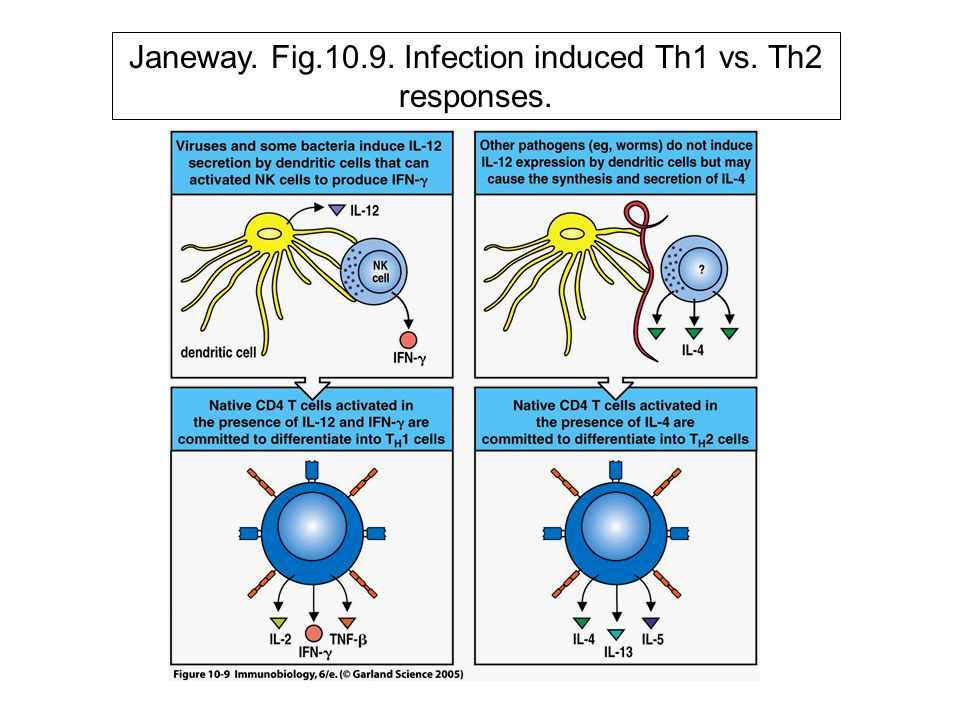 Janeway. Fig. 1.24 Protective effector mechanisms of antibody.