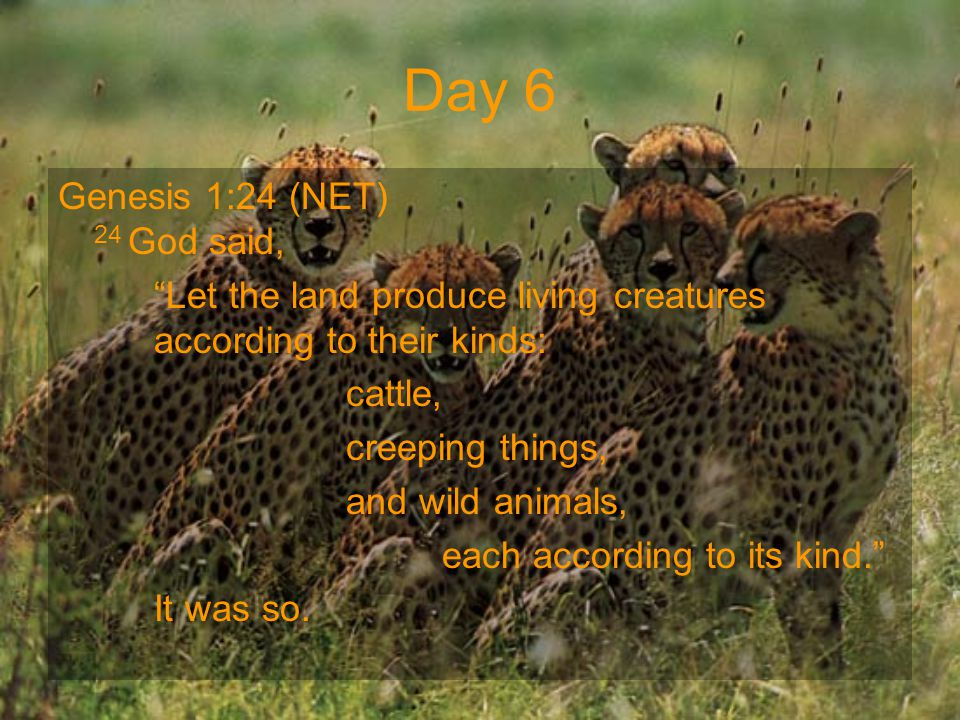 "Day 6 Genesis 1:24 (NET) 24 God said, ""Let the land produce living creatures according to their kinds: cattle, creeping things, and wild animals, each"