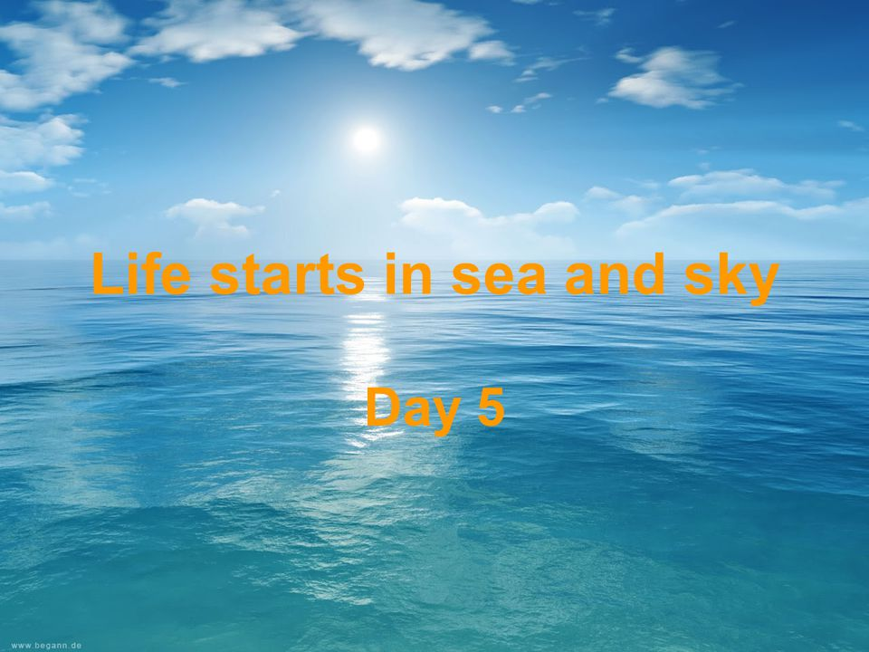 Life starts in sea and sky Day 5