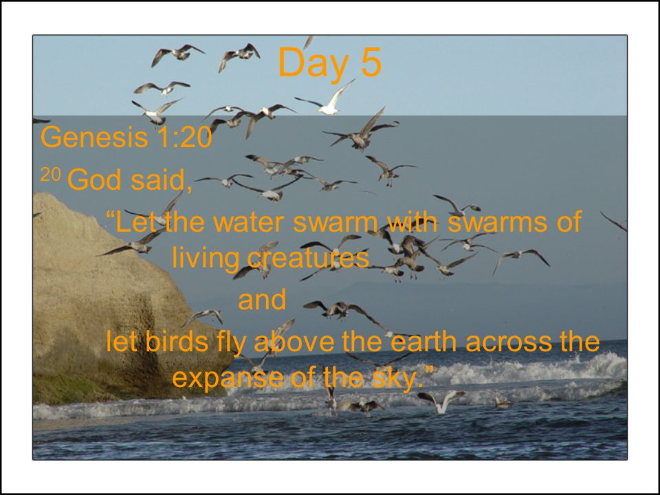 "Day 5 Genesis 1:20 20 God said, ""Let the water swarm with swarms of living creatures and let birds fly above the earth across the expanse of the sky."""