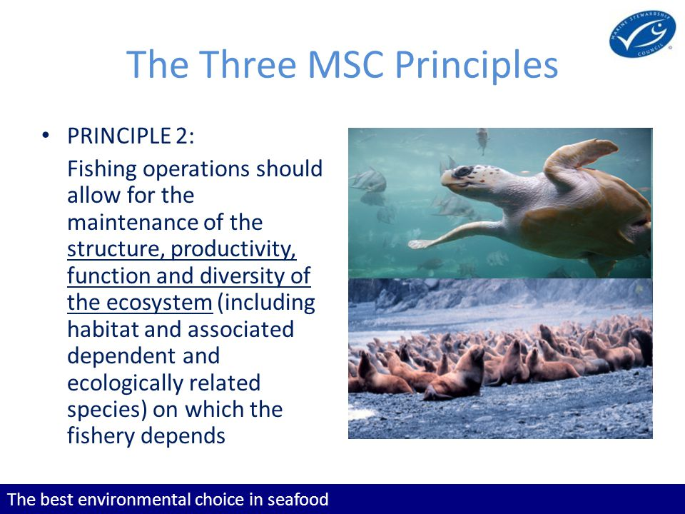 The best environmental choice in seafood The Three MSC Principles PRINCIPLE 2: Fishing operations should allow for the maintenance of the structure, productivity, function and diversity of the ecosystem (including habitat and associated dependent and ecologically related species) on which the fishery depends