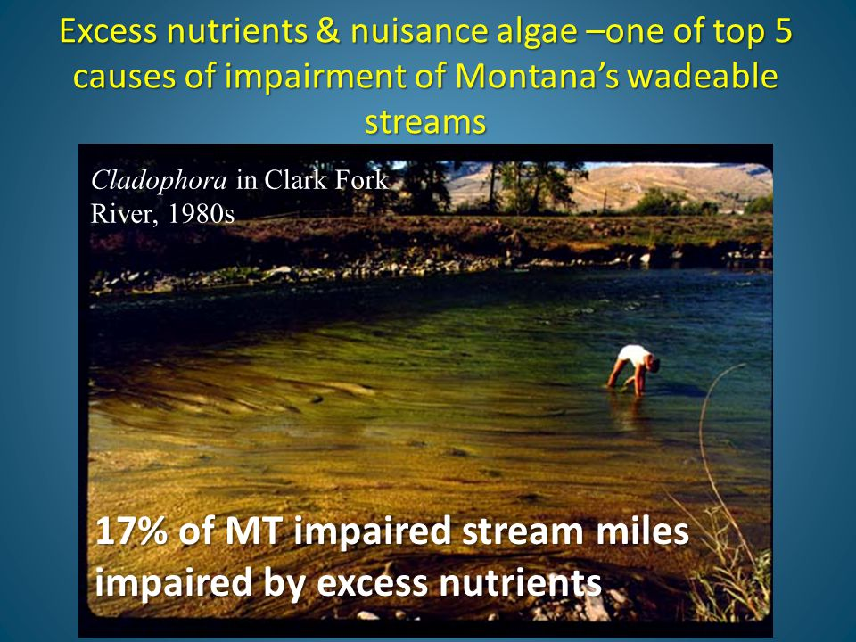 Excess nutrients & nuisance algae –one of top 5 causes of impairment of Montana's wadeable streams 17% of MT impaired stream miles impaired by excess nutrients Cladophora in Clark Fork River, 1980s
