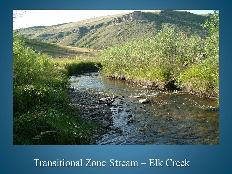Transitional Zone Stream – Elk Creek