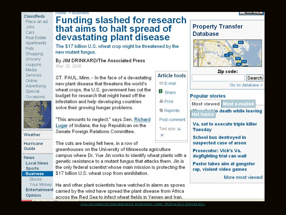 www.dailypress.com/business/dp-biz_endangered_wheat_0528may28,0,3094328.story