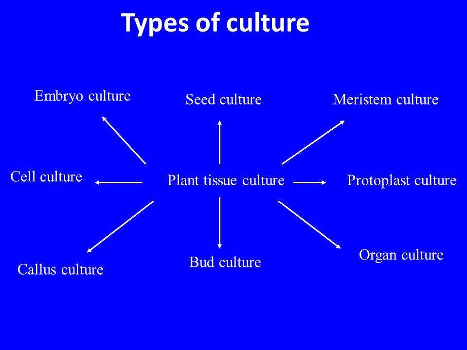 Root Culture Callus arising from root tissue
