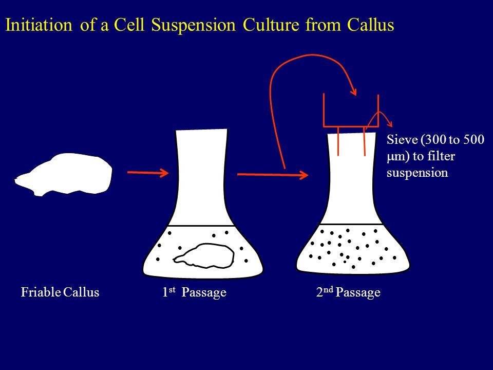 Regeneration of Cereals I.Background - Morphogenesis is focused primarily on producing transgenic plants.
