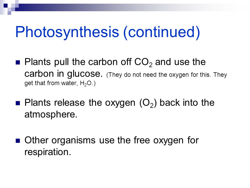 Photosynthesis (continued) Plants pull the carbon off CO 2 and use the carbon in glucose. (They do not need the oxygen for this. They get that from wa