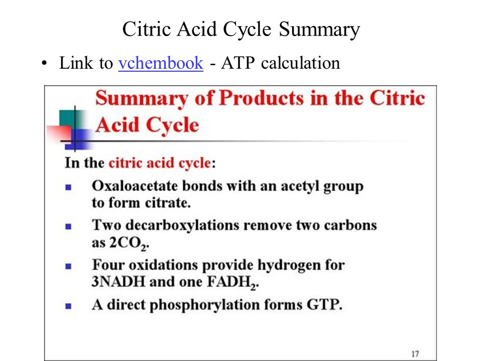 Citric Acid Cycle Summary Link to vchembook - ATP calculationvchembook