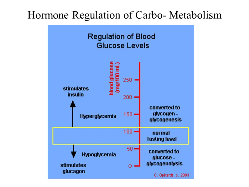 Hormone Regulation of Carbo- Metabolism