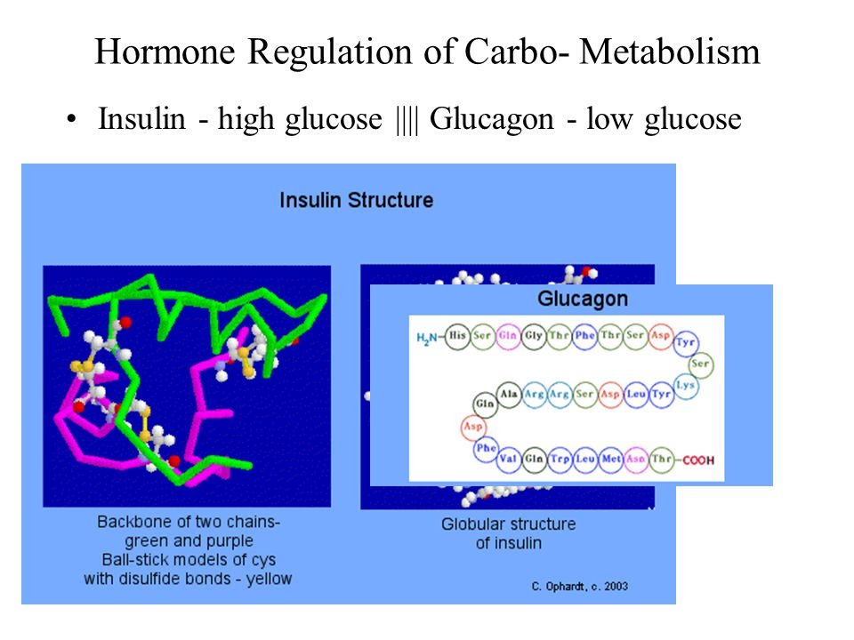 Insulin - high glucose |||| Glucagon - low glucose
