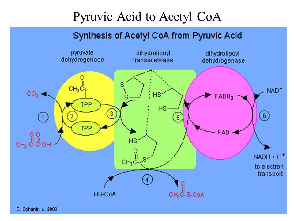 Pyruvic Acid to Acetyl CoA
