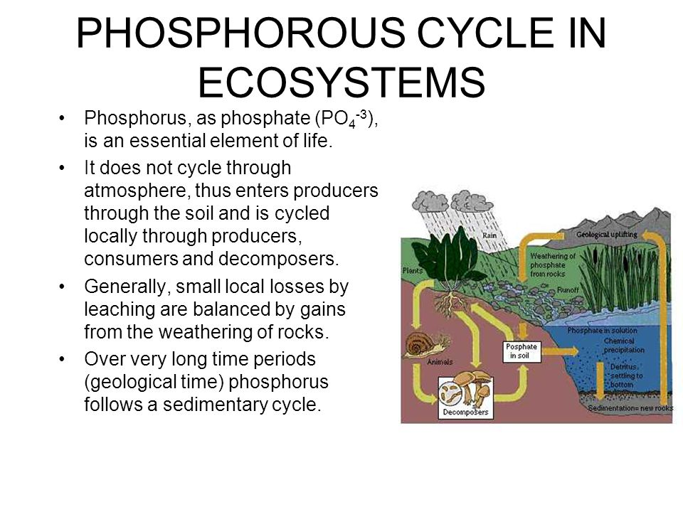 NITROGEN CYCLE IN ECOSYSTEMS Nitrogen (N 2 ) makes up 78% of the atmosphere.