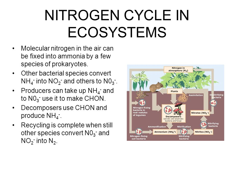 NUTRIENT LOSS IN ECOSYSTEMS I The role of vegetation in nutrient cycles is clearly seen in clear cut experiments at Hubbard Brook.