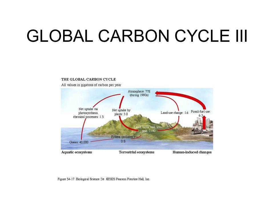 GLOBAL NITROGEN CYCLE I 99.4% of exchangeable N is found in the atmosphere; 0.5% is dissolved in the ocean; 0.04% in detritus ; 0.006% as inorganic N sources; 0.0004% in living biota.