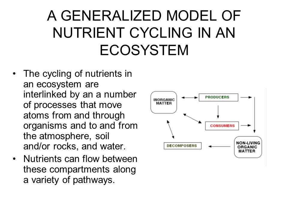 Nutrient Compartments in a Terrestrial Ecosystem The organic compartment consists of the living organisms and their detritus.