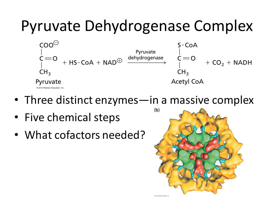 Pyruvate Dehydrogenase Complex Three distinct enzymes—in a massive complex Five chemical steps What cofactors needed