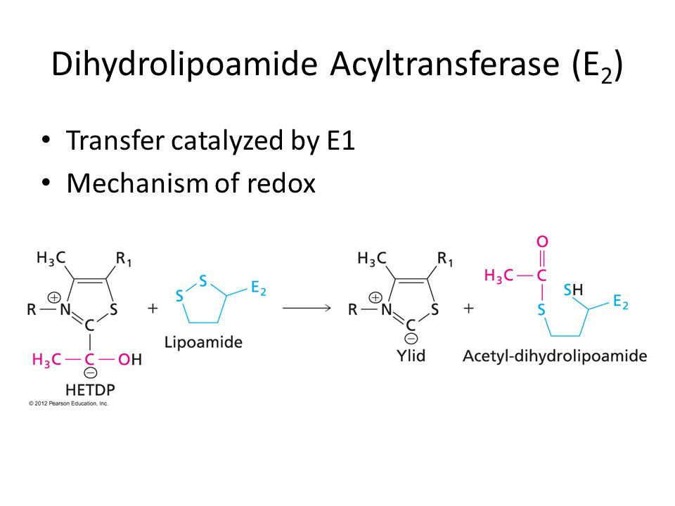 Dihydrolipoamide Acyltransferase (E 2 ) Transfer catalyzed by E1 Mechanism of redox