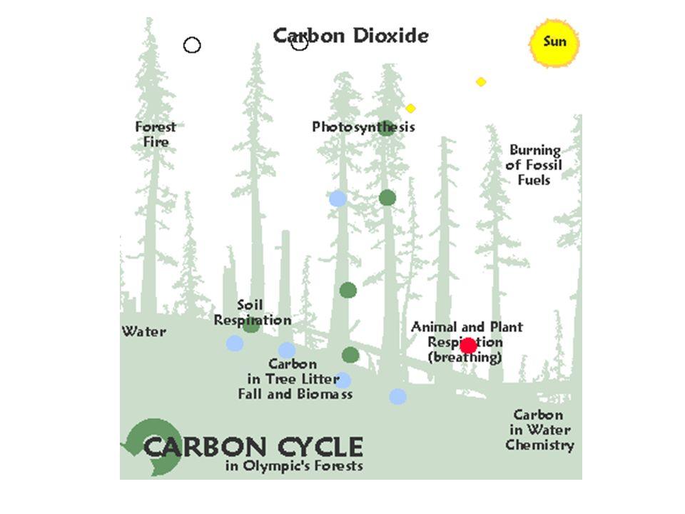 Arctic Carbon Cycling
