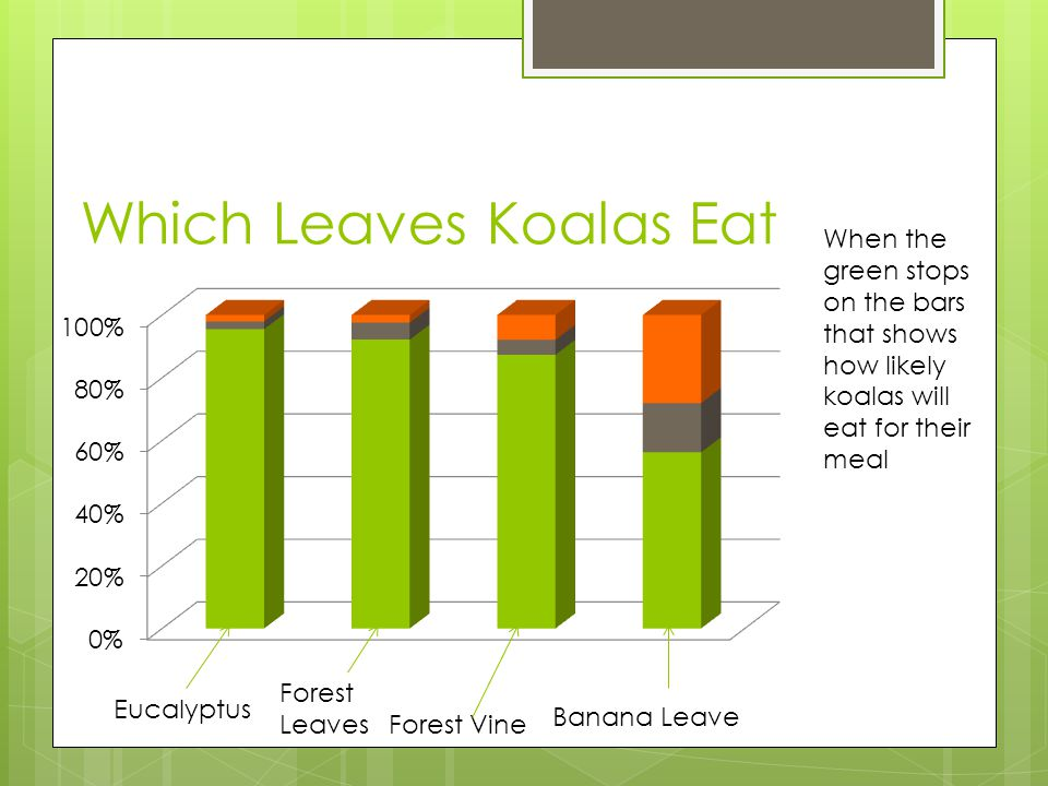 Which Leaves Koalas Eat Eucalyptus Forest Leaves Forest Vine Banana Leave When the green stops on the bars that shows how likely koalas will eat for t