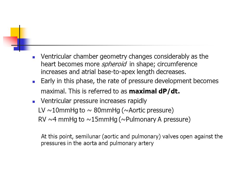 Ventricular chamber geometry changes considerably as the heart becomes more spheroid in shape; circumference increases and atrial base-to-apex length