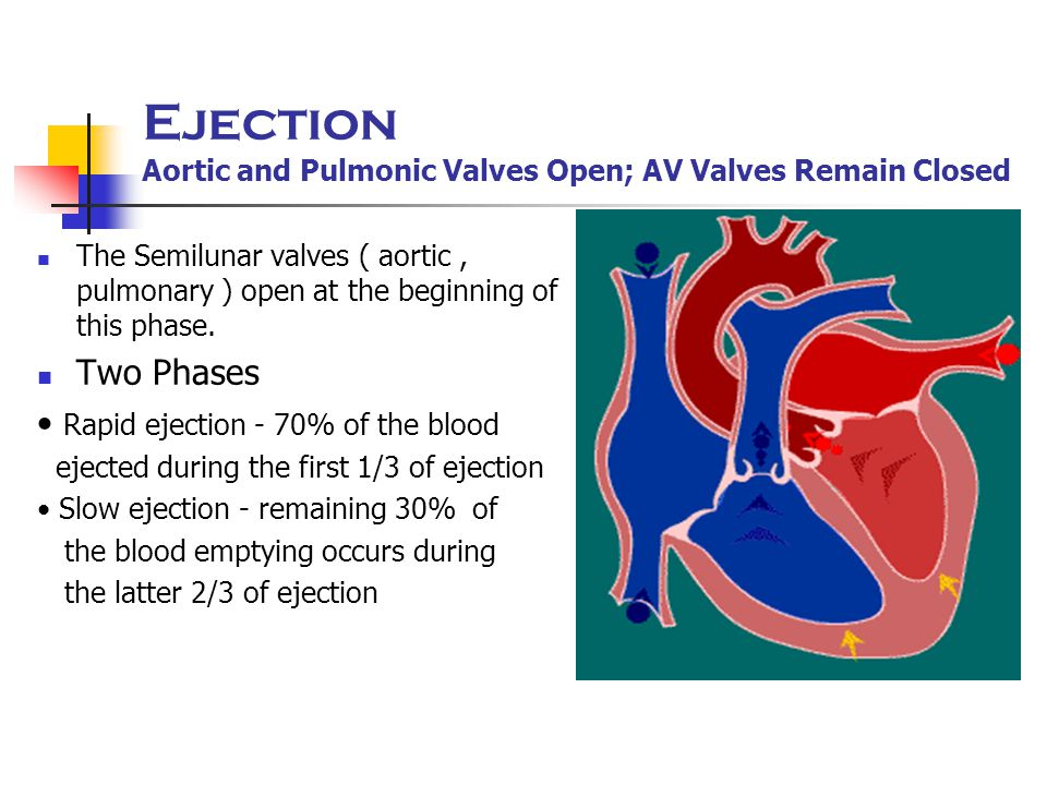 Ejection Aortic and Pulmonic Valves Open; AV Valves Remain Closed The Semilunar valves ( aortic, pulmonary ) open at the beginning of this phase. Two