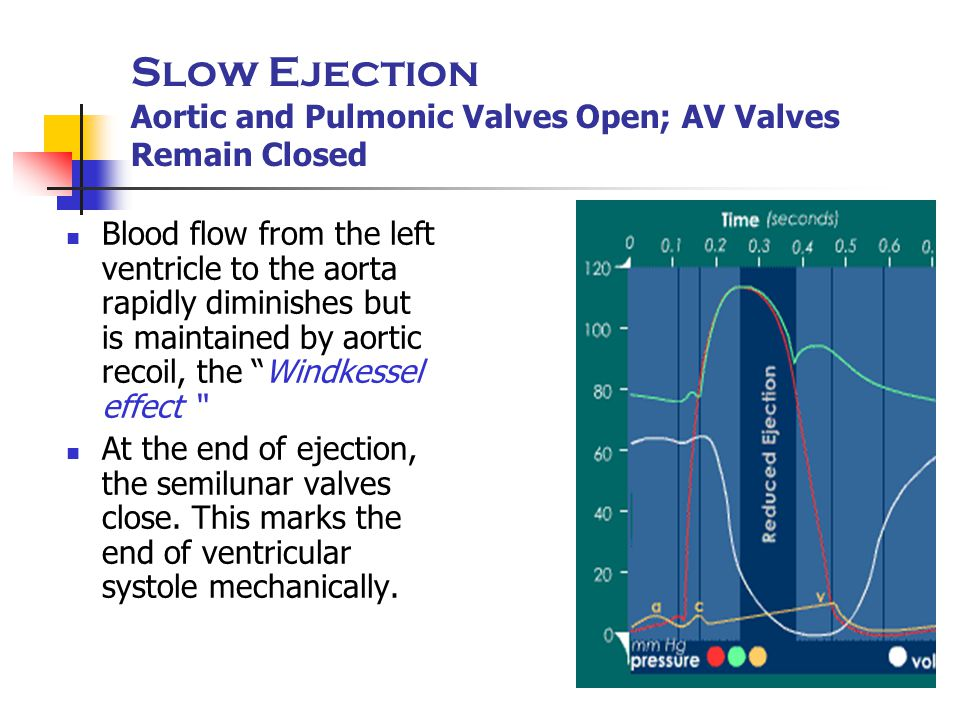 Slow Ejection Aortic and Pulmonic Valves Open; AV Valves Remain Closed Blood flow from the left ventricle to the aorta rapidly diminishes but is maint