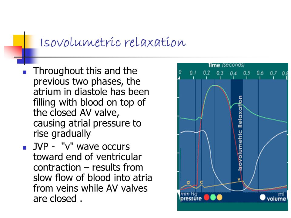 Isovolumetric relaxation Throughout this and the previous two phases, the atrium in diastole has been filling with blood on top of the closed AV valve