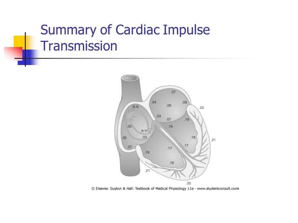 Summary of Cardiac Impulse Transmission