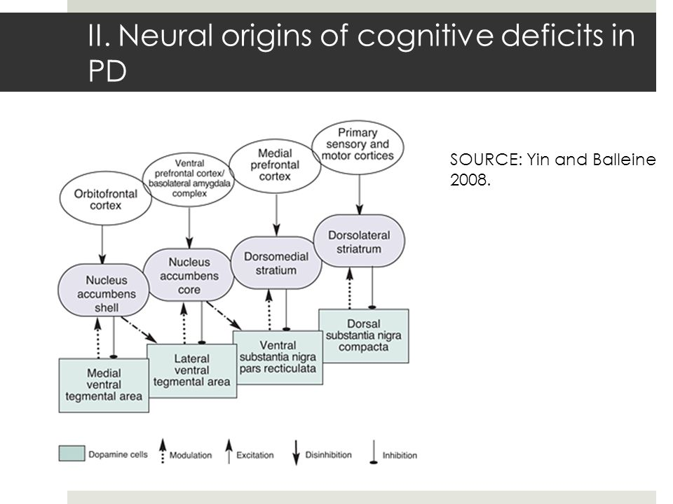 II. Neural origins of cognitive deficits in PD SOURCE: Yin and Balleine 2008.