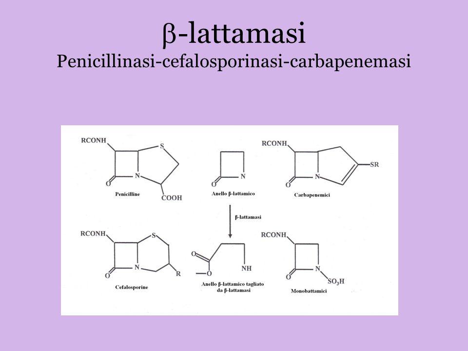 -lattamasi Penicillinasi-cefalosporinasi-carbapenemasi