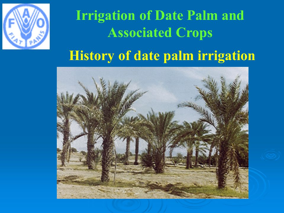 Irrigation of Date Palm and Associated Crops History of date palm irrigation