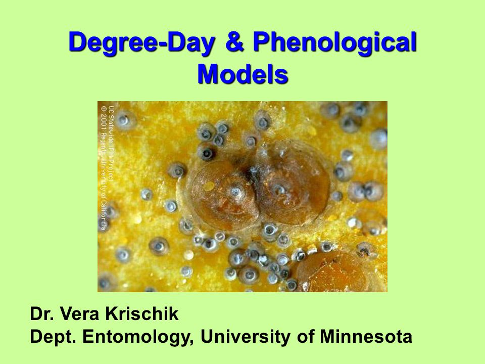 Dr. Vera Krischik Dept. Entomology, University of Minnesota Degree-Day & Phenological Models