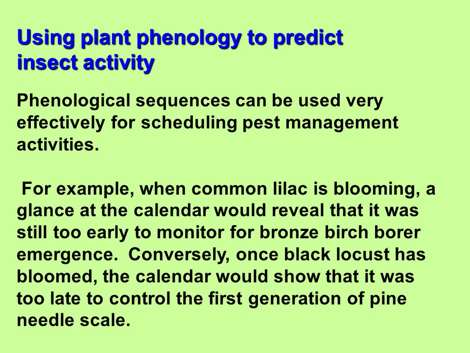 Phenological sequences can be used very effectively for scheduling pest management activities. For example, when common lilac is blooming, a glance at