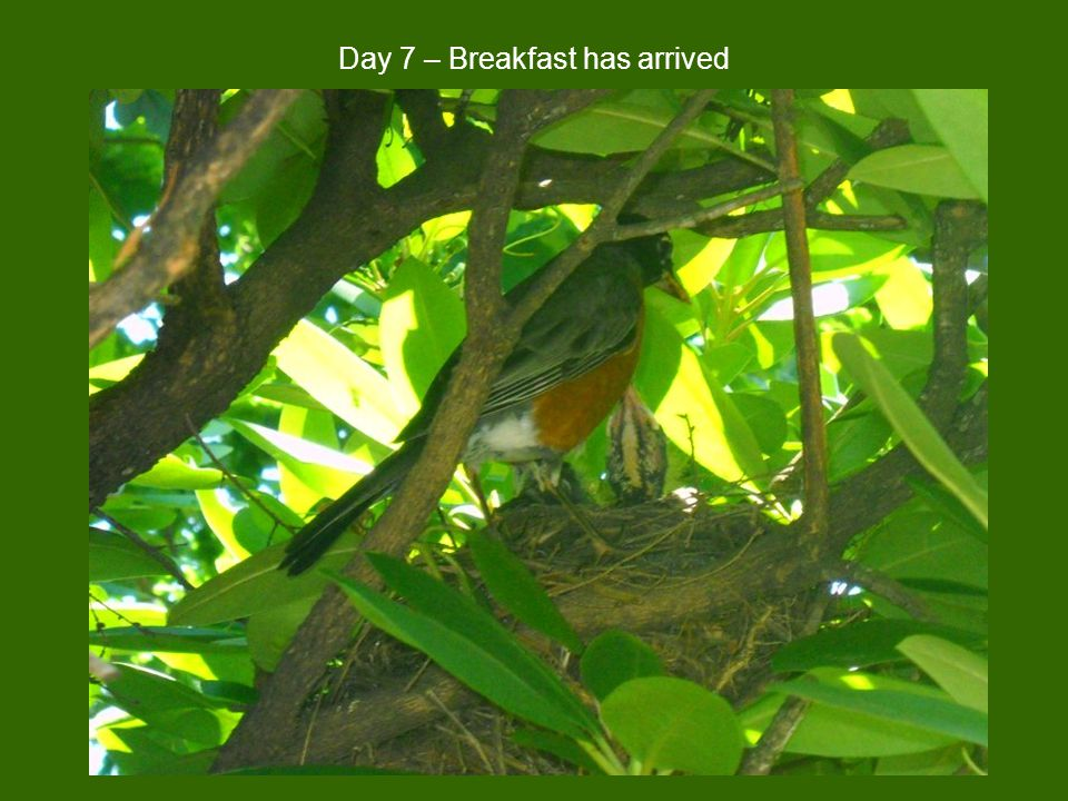 Day 7 – Breakfast has arrived