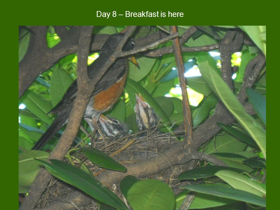 Day 8 – Breakfast is here