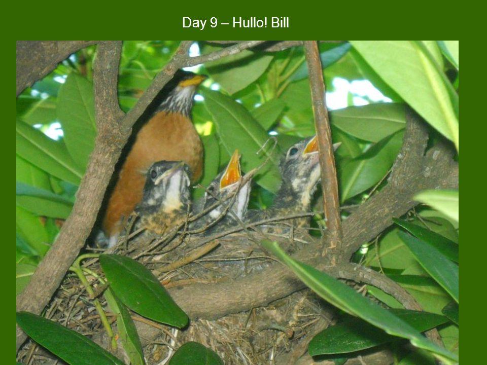 Day 9 – Hullo! Bill