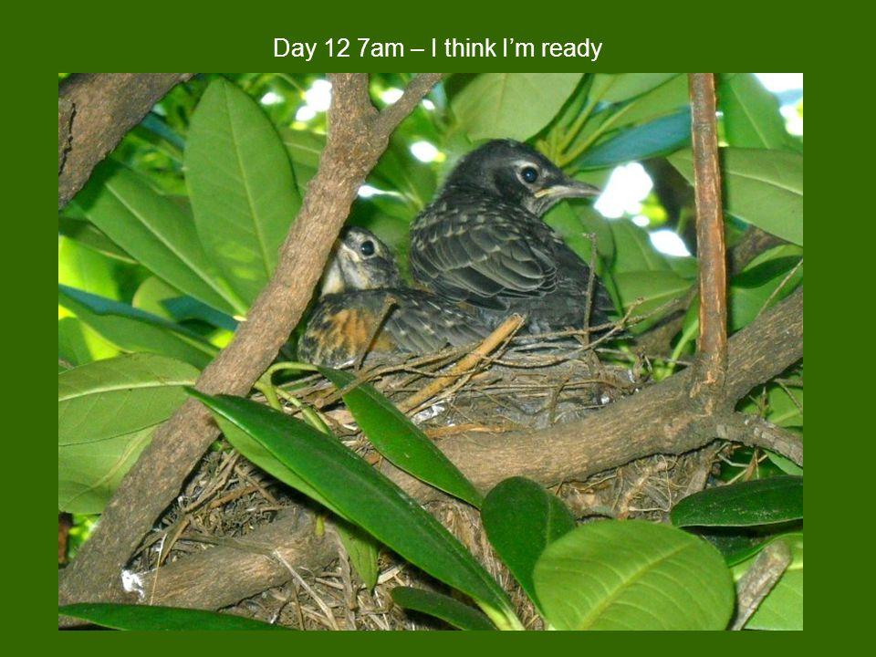 Day 12 7am – I think I'm ready