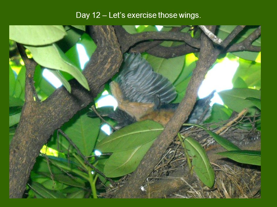 Day 12 – Let's exercise those wings.