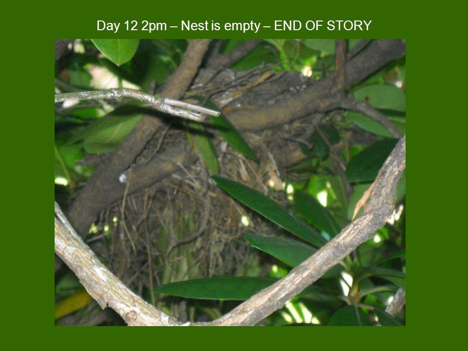 Day 12 2pm – Nest is empty – END OF STORY