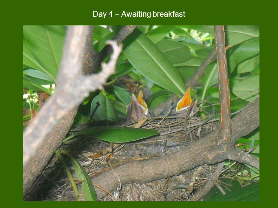 Day 4 – Awaiting breakfast