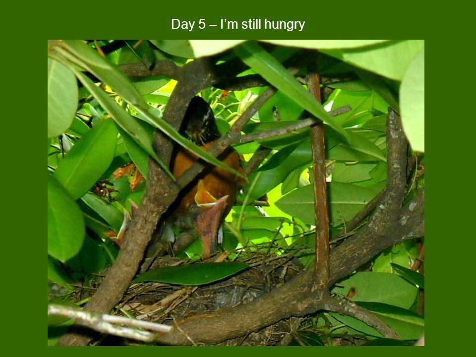 Day 5 – I'm still hungry