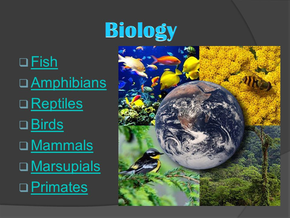  Fish Fish  Amphibians Amphibians  Reptiles Reptiles  Birds Birds  Mammals Mammals  Marsupials Marsupials  Primates Primates